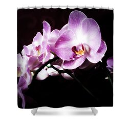 An Orchid For You Shower Curtain by Gabriella Weninger - David