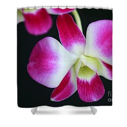 An Orchid Shower Curtain by Sabrina L Ryan