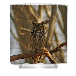 An Owl Shower Curtain by Raymond Salani III