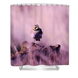 An Searching Gaze  Shower Curtain by Jeff Swan