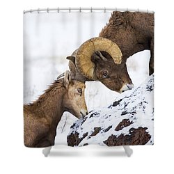 An Uphill Battle Shower Curtain by Mike  Dawson