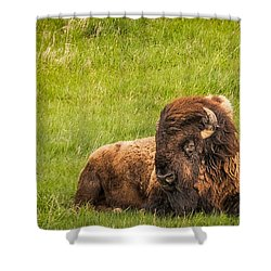 Shower Curtain featuring the photograph Ancient Bison by Rikk Flohr