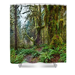 Ancient Forest Panorama Shower Curtain