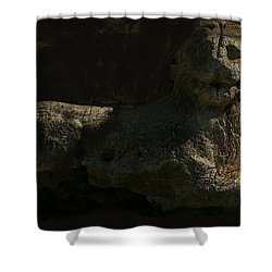 Shower Curtain featuring the photograph Ancient Lion - Nocisia  by Jim Vance