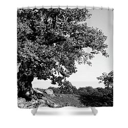 Ancient Oak, Bradgate Park Shower Curtain