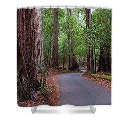 Ancient Redwoods Shower Curtain