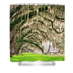 Ancient Southern Oaks Shower Curtain