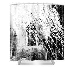 Andalusian Stallion Black And White Shower Curtain by Jani Freimann