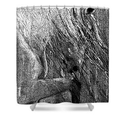 Andalusian Stallion Black And White Stippled Shower Curtain by Jani Freimann