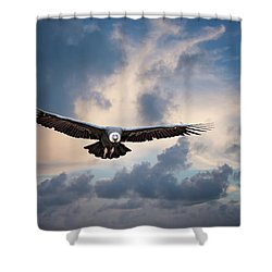 Andean Condor Shower Curtain