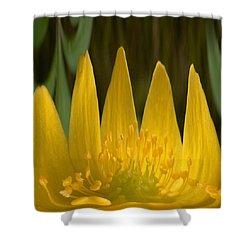Anemone Flames Shower Curtain by Jouko Lehto