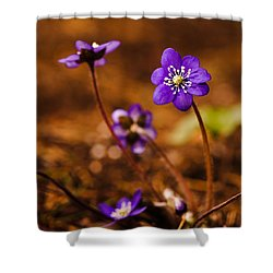 Anemone Hepatica Shower Curtain