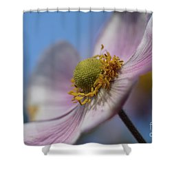 Anemone Tomentosa Close Up Shower Curtain