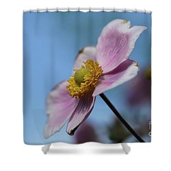 Anemone Tomentosa Flower Shower Curtain