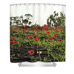 Anemones Forest Panorama Shower Curtain by Yoel Koskas