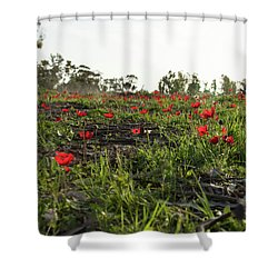 Anemones Forest Shower Curtain by Yoel Koskas