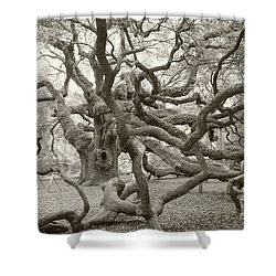 Angel Oak Antiqued Shower Curtain