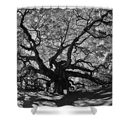 Shower Curtain featuring the photograph Angel Oak Johns Island Black And White by Lisa Wooten