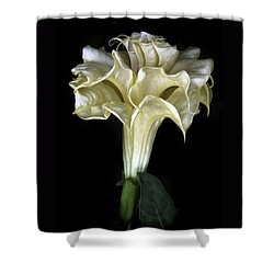 Angel Trumpet Shower Curtain by Jessica Jenney