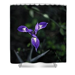 Angelpod Blue Flag Shower Curtain by Sally Weigand