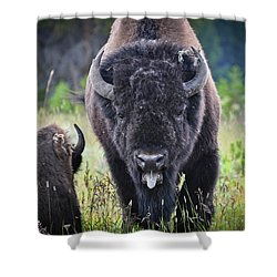 Angry Bison Shower Curtain by Greg Norrell