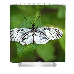 Angry Butterfly With A Mustache Shower Curtain
