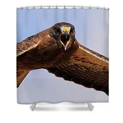 Angry Swainson's Hawk Shower Curtain