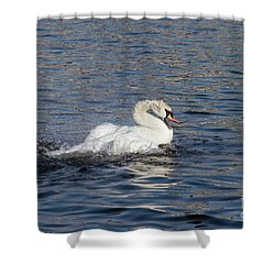 Angry Swan On The Water Shower Curtain by Michal Boubin