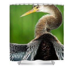 Anhinga Anhinga Anhinga, Pantanal Shower Curtain