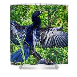 Shower Curtain featuring the photograph Anhinga Blue Eye by Deborah Benoit
