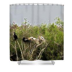 Anhinga Family Shower Curtain