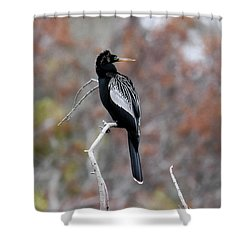 Anhinga Shower Curtain by Gary Wightman