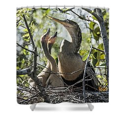 Anhinga In Nest With Her Chicks Shower Curtain
