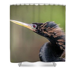 Anhinga Portrait Shower Curtain