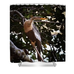 Anhinga Water Fowl Shower Curtain