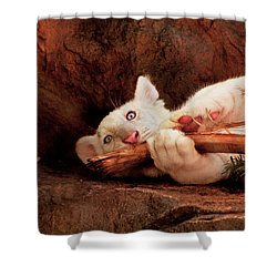 Animal - Cat - My Chew Toy Shower Curtain by Mike Savad