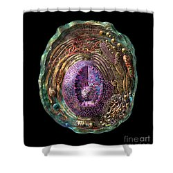 Animal Cell Shower Curtain by Russell Kightley