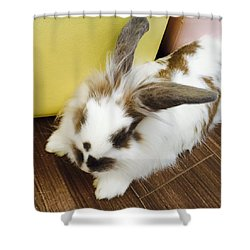 Animal Shower Curtain by Nao Yos