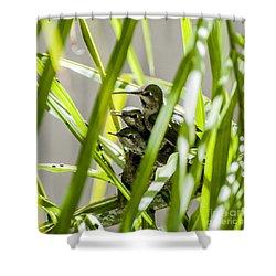 Anna Hummer On Nest Shower Curtain
