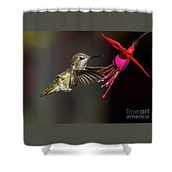 Anna Juvenile Hummingbird Shower Curtain