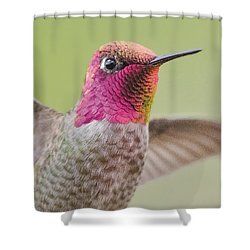Anna's Hummingbird Closup In Flight Shower Curtain