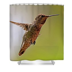 Shower Curtain featuring the photograph Anna's Hummingbird H24 by Mark Myhaver