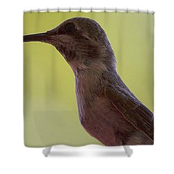 Shower Curtain featuring the photograph Annas Hummingbird With Nectar by Anne Rodkin
