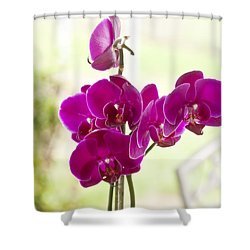 Shower Curtain featuring the photograph Anniversary Orchids by Joan Bertucci