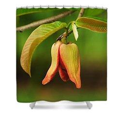 Annona Purpurea Flower Shower Curtain