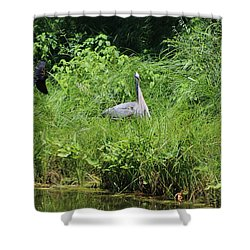 Annoyed - Heron And Red Winged Blackbird 1 Of 10 Shower Curtain