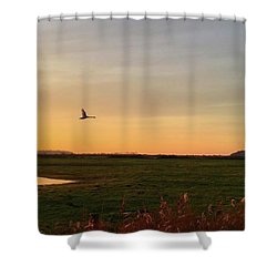 Another Iphone Shot Of The Swan Flying Shower Curtain by John Edwards