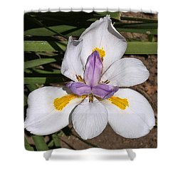 Shower Curtain featuring the photograph Another Lily by Daniel Hebard
