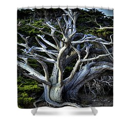 Ansel's Cypress Shower Curtain