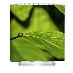 Ant Life Shower Curtain